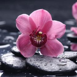 Obraz na plátne 30x30 Lávový kvet III.