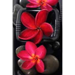 Obraz na plátne 40x50 Relaxačné kvety