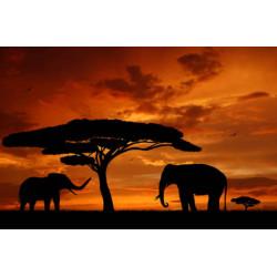 Obraz na plátne 50x70  Afrika I.