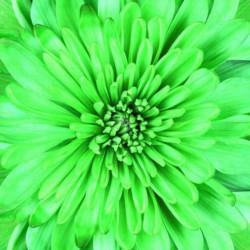 Obraz na skle 50x50