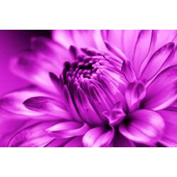 Obraz na skle 40x60