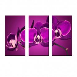 Obaz 3x   30x70cm Orchidea Magent